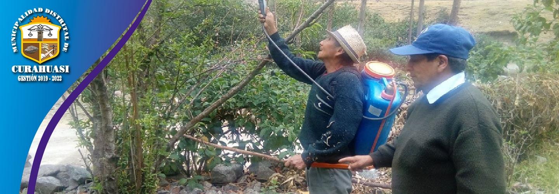 MUNICIPALIDAD DISTRITAL DE CURAHUASI LLEVA A CABO CAPACITACION EN MANEJO DE PLAGAS EN FRUTALES
